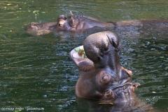 Zoo_Hannover_020916_IMG_7243