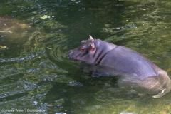 Zoo_Hannover_020916_IMG_7257