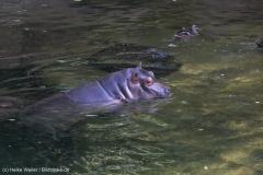 Zoo_Hannover_020916_IMG_7320
