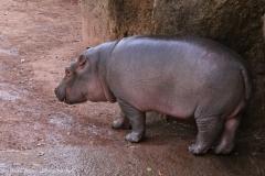 Zoo_Hannover_020916_IMG_7387