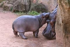 Zoo_Hannover_020916_IMG_7390