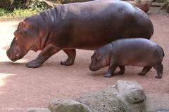 Zoo_Hannover_020916_IMG_7399