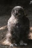 Zoo_Hannover_020916_IMG_7467