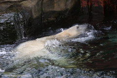 Zoo_Hannover_020916_IMG_7479