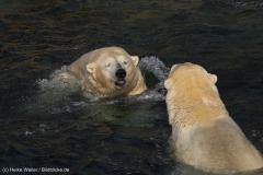 Zoo_Hannover_020916_IMG_7493