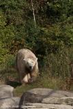 Zoo_Hannover_020916_IMG_7533