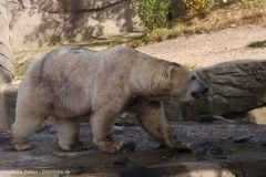 Zoo_Hannover_020916_IMG_7536