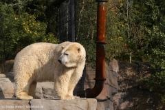 Zoo_Hannover_020916_IMG_7540