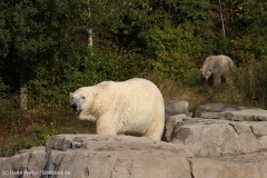 Zoo_Hannover_020916_IMG_7582