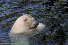 Zoo_Hannover_020916_IMG_7623