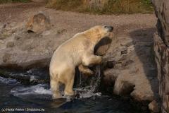 Zoo_Hannover_020916_IMG_7649
