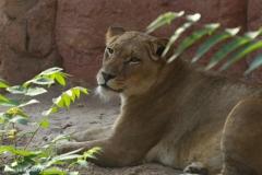 Zoo_Hannover_020916_IMG_7698