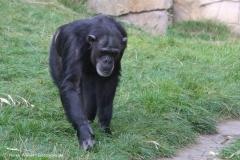 Zoo_Hannover_020916_IMG_7713