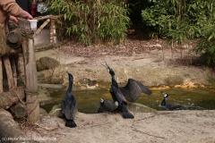 Zoo_Hannover_030416_IMG_0523