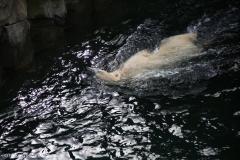 Zoo_Hannover_030416_IMG_0619