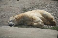 Zoo_Hannover_030416_IMG_0633