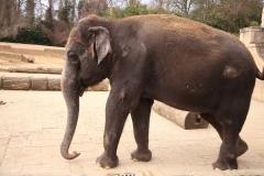 Zoo_Hannover_030416_IMG_0658