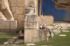 Zoo_Hannover_030416_IMG_0666