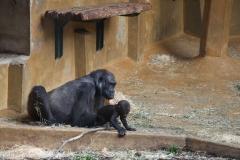 Zoo_Hannover_030416_IMG_0725