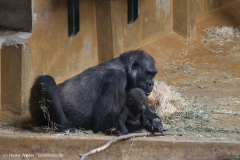 Zoo_Hannover_030416_IMG_0726