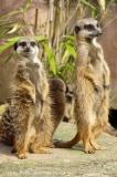 Zoo_Hannover_030416_IMG_8449