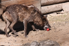 Zoo-Hannover-030610-IMG_2782