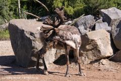 Zoo-Hannover-030610-IMG_2833
