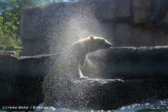Zoo-Hannover-030610-IMG_2971