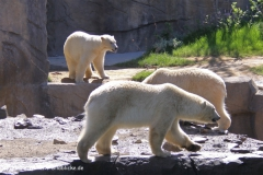 Zoo-Hannover-030610-IMG_3069
