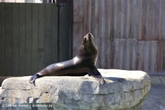 Zoo-Hannover-030610-IMG_3078-2