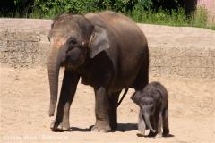 Zoo-Hannover-030610-IMG_3111