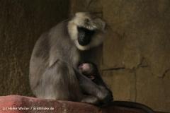 Zoo-Hannover-030610-IMG_3139