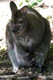 Zoo-Hannover-030610-IMG_3201