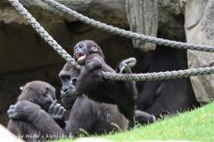Zoo_Hannover_050713_IMG_2868