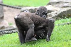 Zoo_Hannover_050713_IMG_2873