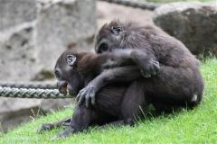 Zoo_Hannover_050713_IMG_2876