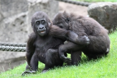 Zoo_Hannover_050713_IMG_2878