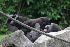 Zoo_Hannover_050713_IMG_2892