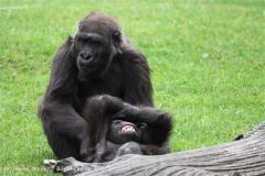 Zoo_Hannover_050713_IMG_2895