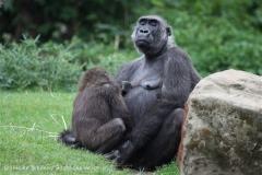 Zoo_Hannover_050713_IMG_2910