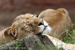 Zoo_Hannover_050713_IMG_2934