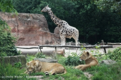 Zoo_Hannover_050713_IMG_2937
