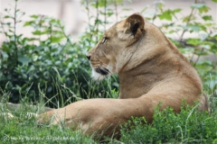 Zoo_Hannover_050713_IMG_2939