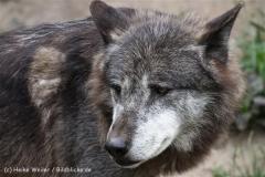 Zoo_Hannover_050713_IMG_2951