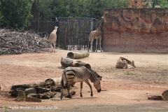 Zoo_Hannover_050914_copy_Heike_Weiler_IMG_6615