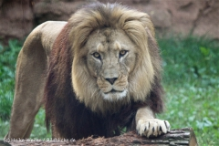 Zoo_Hannover_050914_copy_Heike_Weiler_IMG_6617