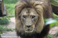 Zoo_Hannover_050914_copy_Heike_Weiler_IMG_6623
