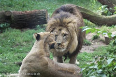 Zoo_Hannover_050914_copy_Heike_Weiler_IMG_6628