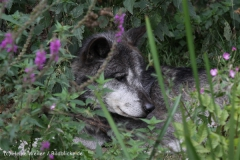 Zoo_Hannover_050914_copy_Heike_Weiler_IMG_6635