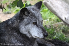 Zoo_Hannover_050914_copy_Heike_Weiler_IMG_6641
